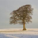 arbre_hivern